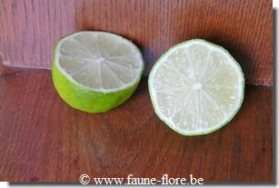 photos450/citrus_aurantiifolia_divers.jpg